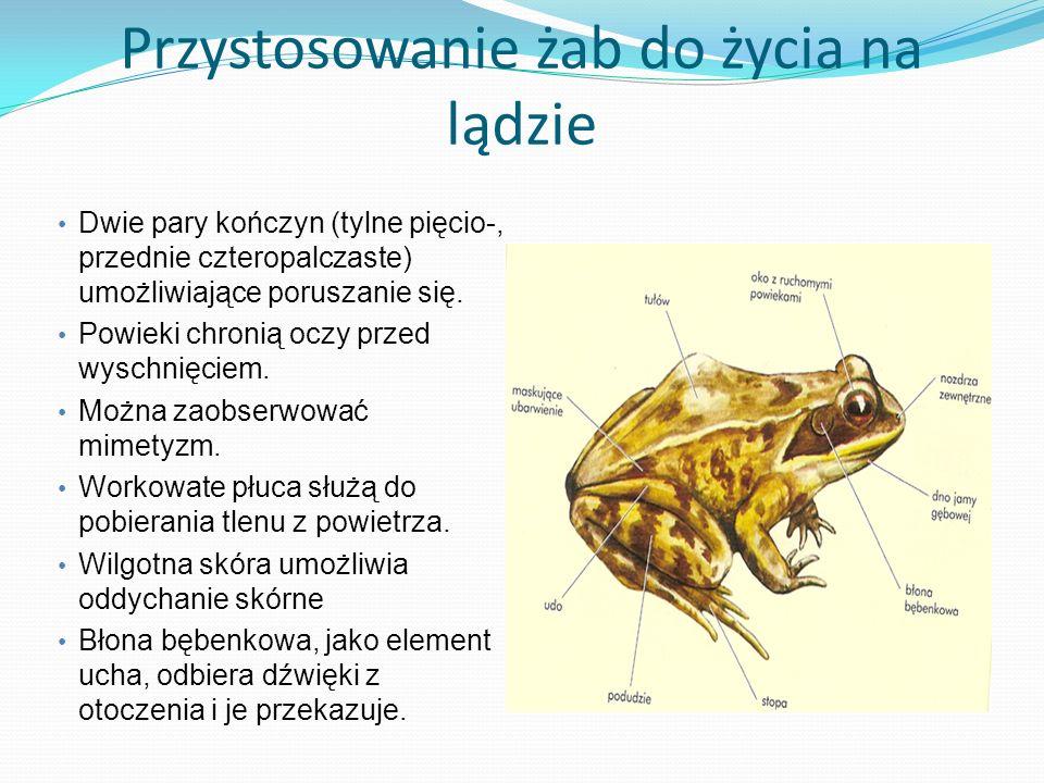 Przystosowanie żab do życia na lądzie