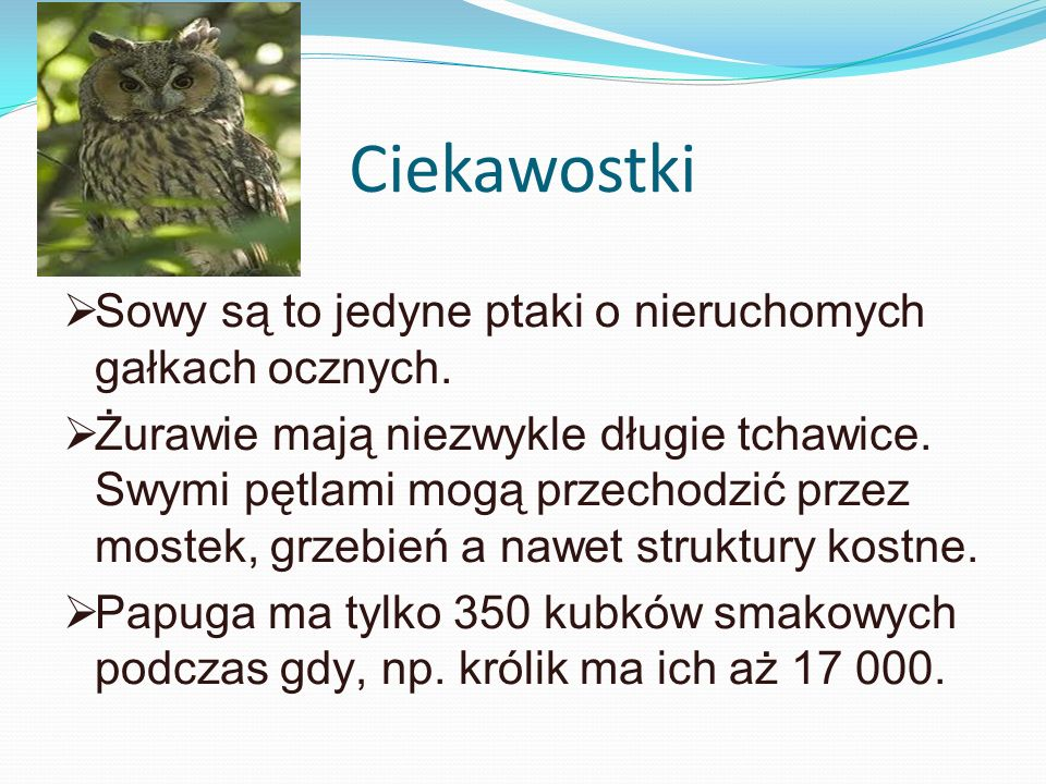 Ciekawostki Sowy są to jedyne ptaki o nieruchomych gałkach ocznych.