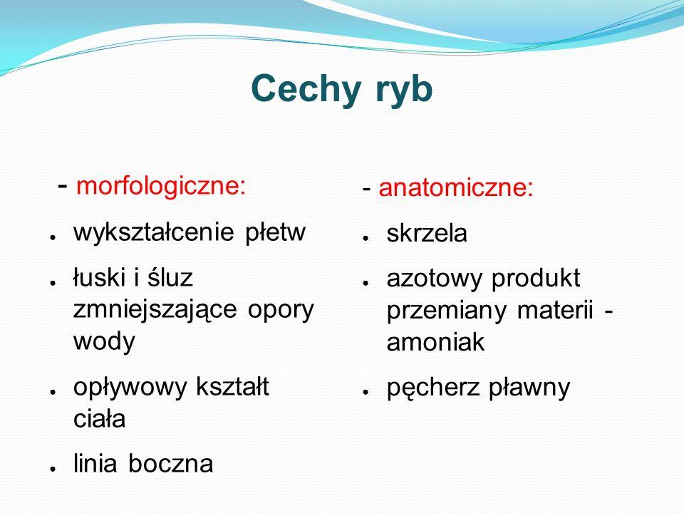 Cechy ryb - morfologiczne: - anatomiczne: wykształcenie płetw skrzela