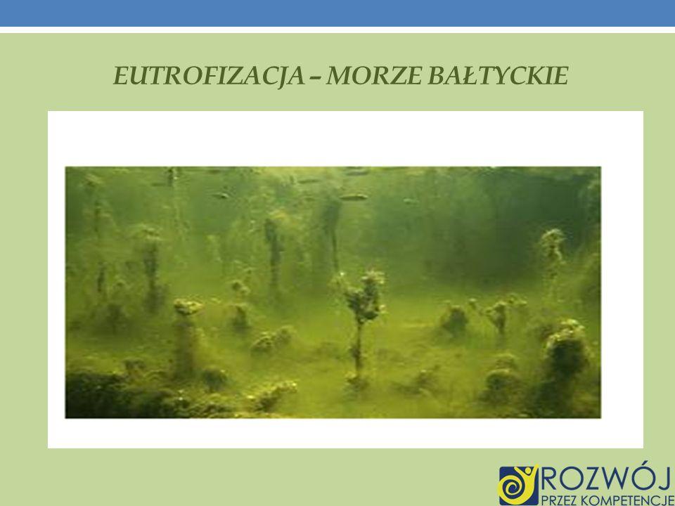 Eutrofizacja – morze bałtyckie