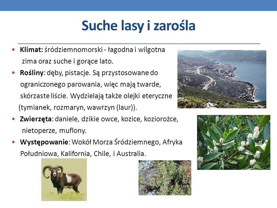 Suche lasy i zarośla Klimat: śródziemnomorski - łagodna i wilgotna
