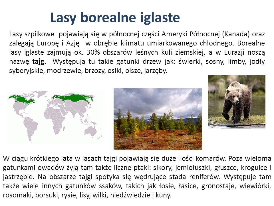 Lasy borealne iglaste