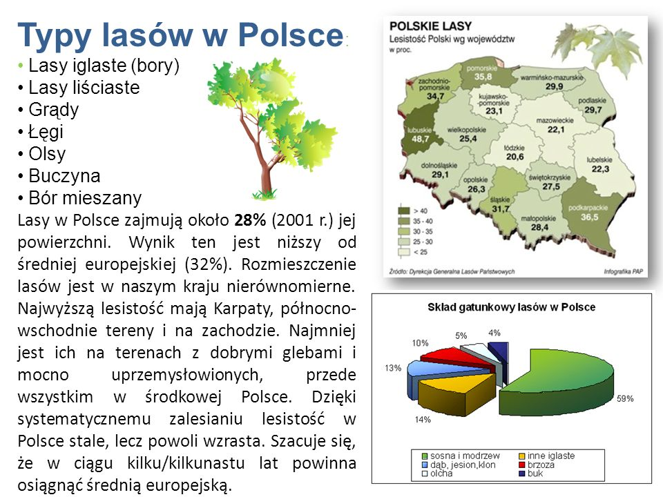 Typy lasów w Polsce: Lasy iglaste (bory) Lasy liściaste Grądy Łęgi