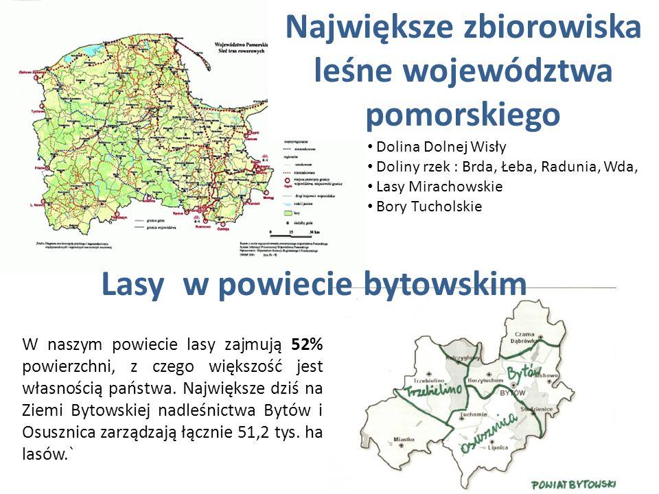Największe zbiorowiska leśne województwa pomorskiego