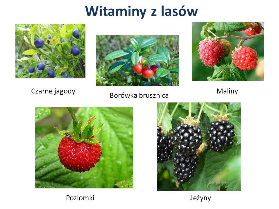 Witaminy z lasów Czarne jagody Maliny Borówka brusznica Poziomki