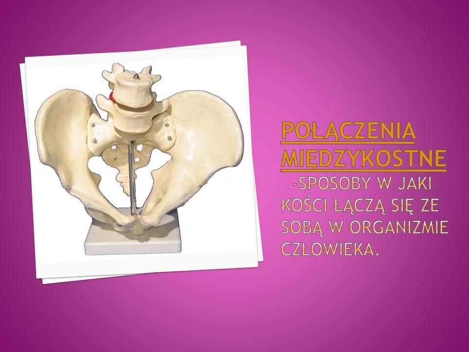 Połączenia międzykostne -sposoby w jaki kości łączą się ze sobą w organizmie człowieka.