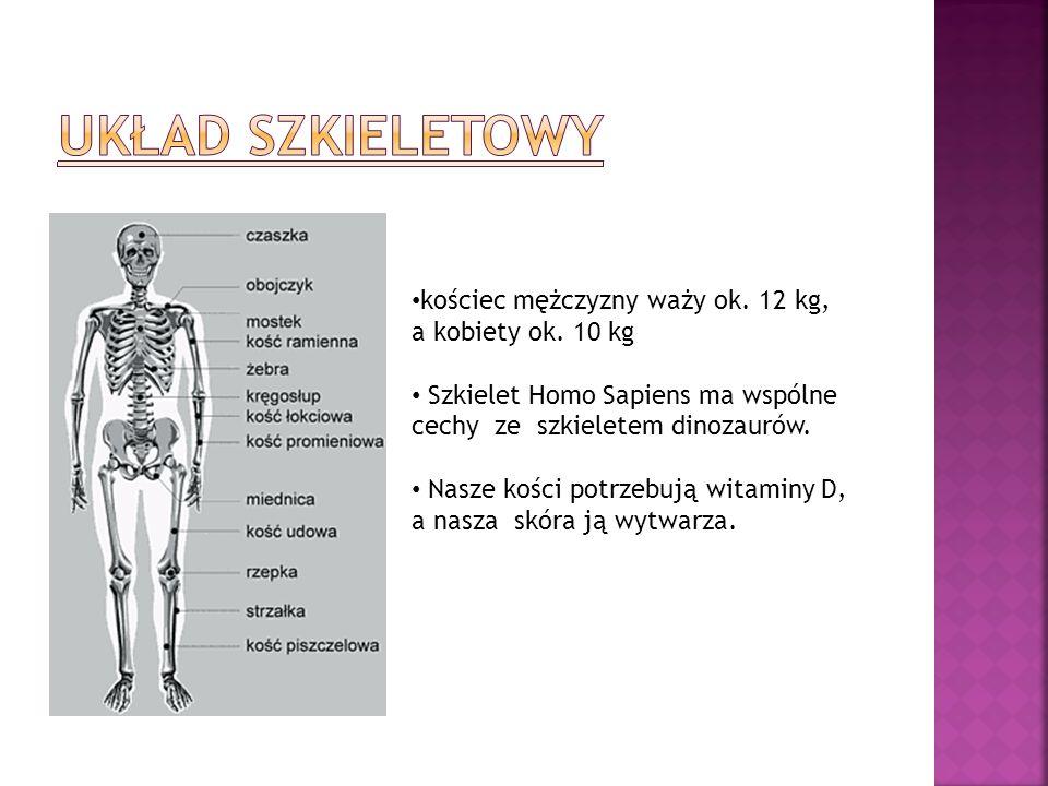 Układ szkieletowy kościec mężczyzny waży ok. 12 kg,