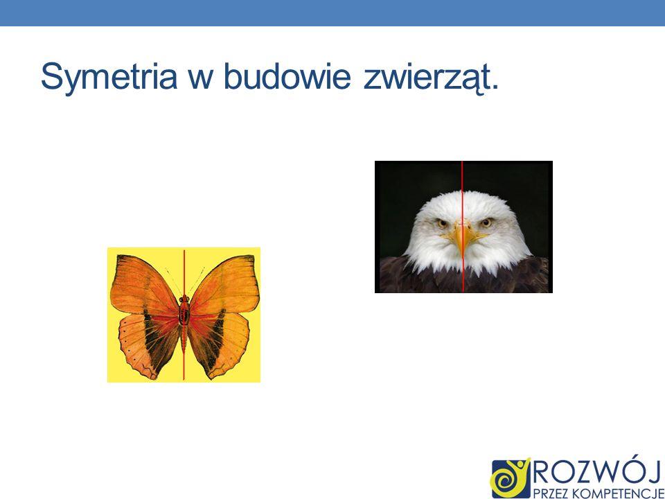 Symetria w budowie zwierząt.