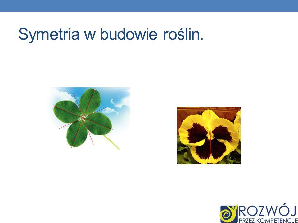 Symetria w budowie roślin.