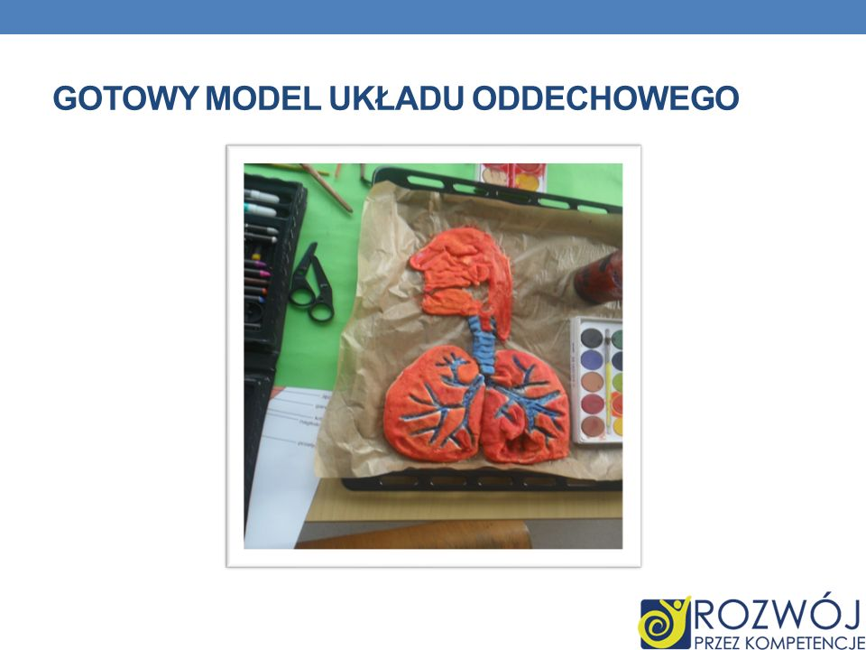 Gotowy model układu oddechowego
