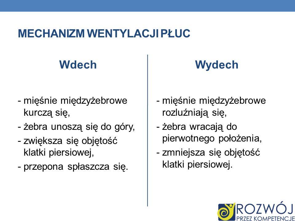 Mechanizm wentylacji płuc