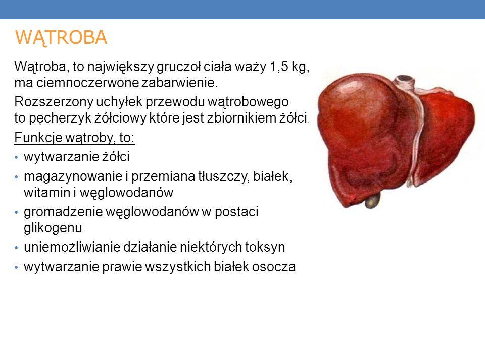 WĄTROBA Wątroba, to największy gruczoł ciała waży 1,5 kg, ma ciemnoczerwone zabarwienie.