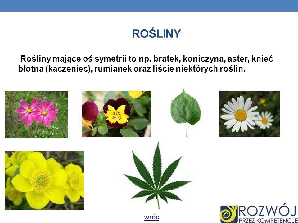 ROŚLINY Rośliny mające oś symetrii to np. bratek, koniczyna, aster, knieć błotna (kaczeniec), rumianek oraz liście niektórych roślin.
