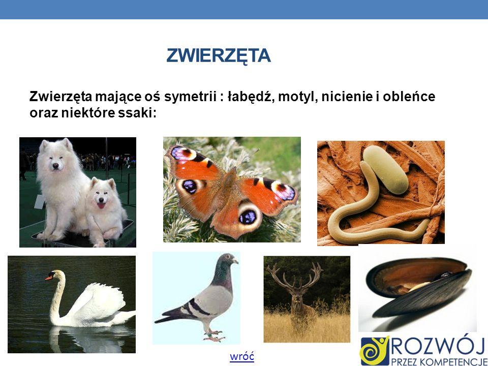 ZWIERZĘTA Zwierzęta mające oś symetrii : łabędź, motyl, nicienie i obleńce oraz niektóre ssaki: wróć.