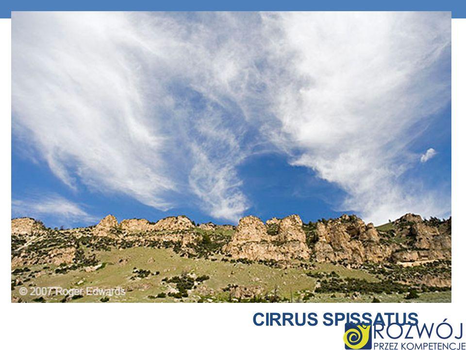 Cirrus spissatus