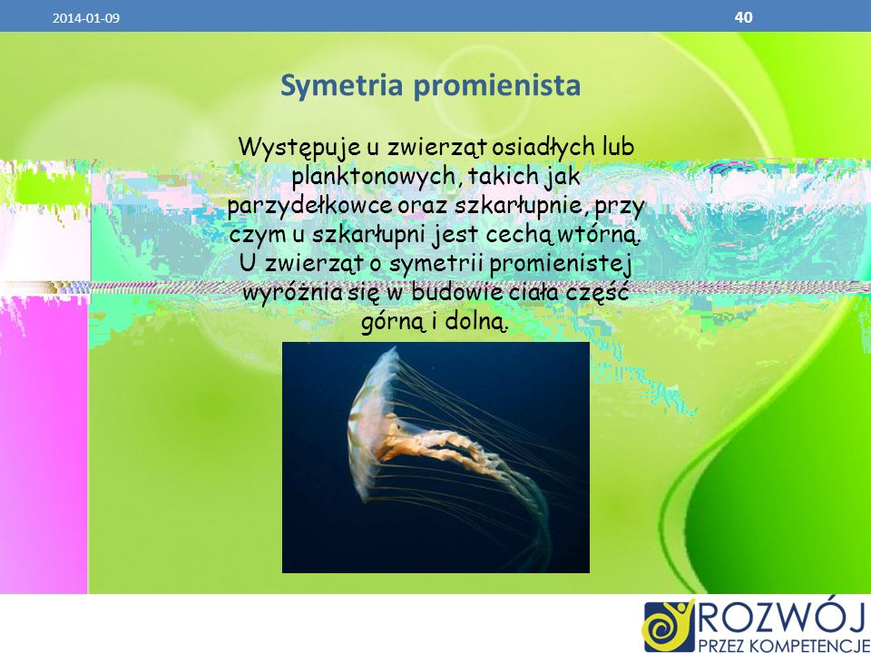2017-03-26 Symetria promienista.