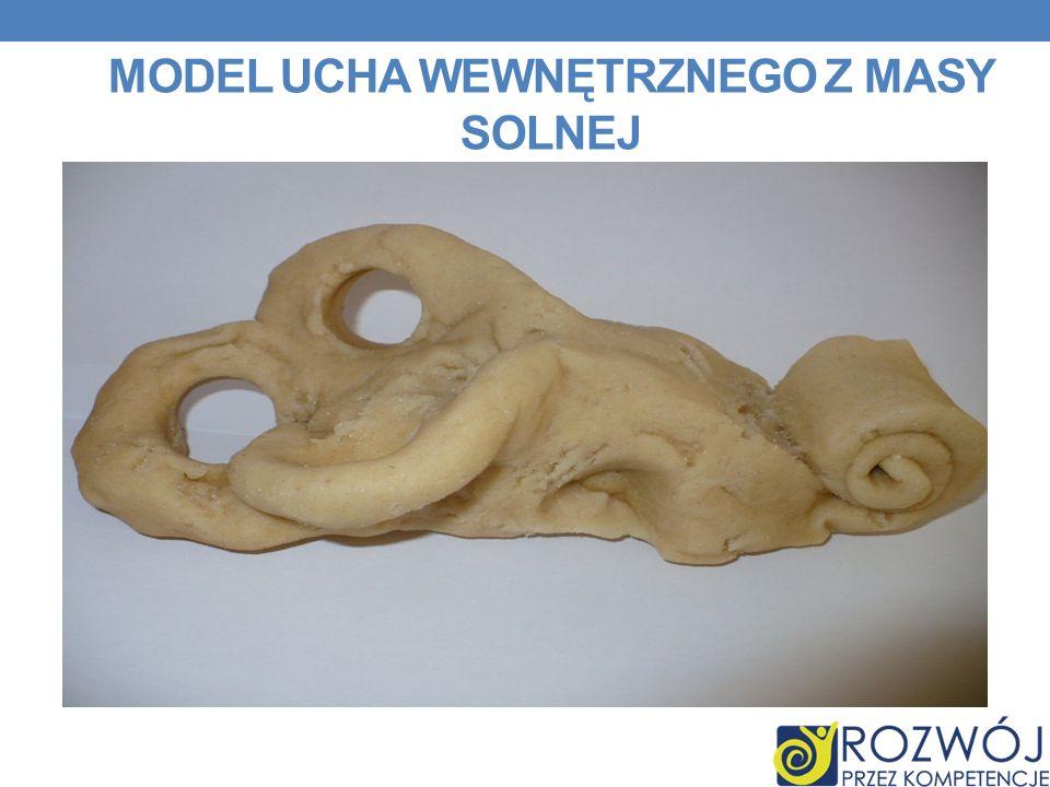 Model Ucha wewnętrznego z masy solnej