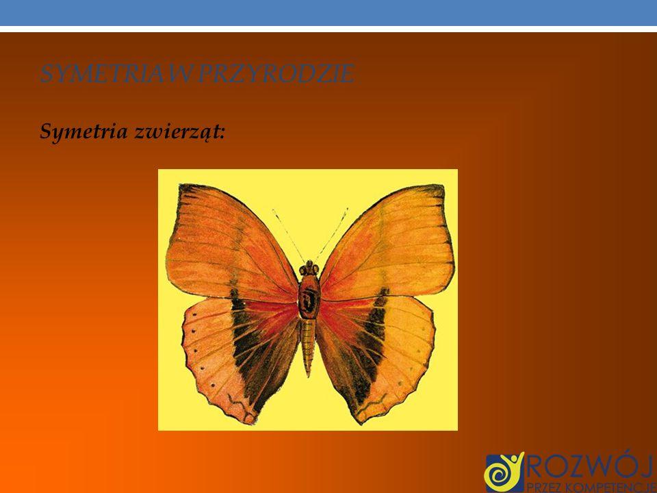 SYMETRIA W PRZYRODZIE Symetria zwierząt: