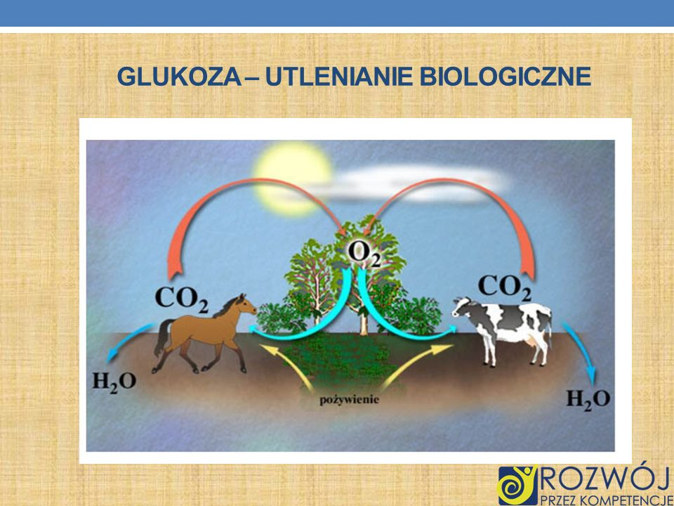 Glukoza – utlenianie biologiczne