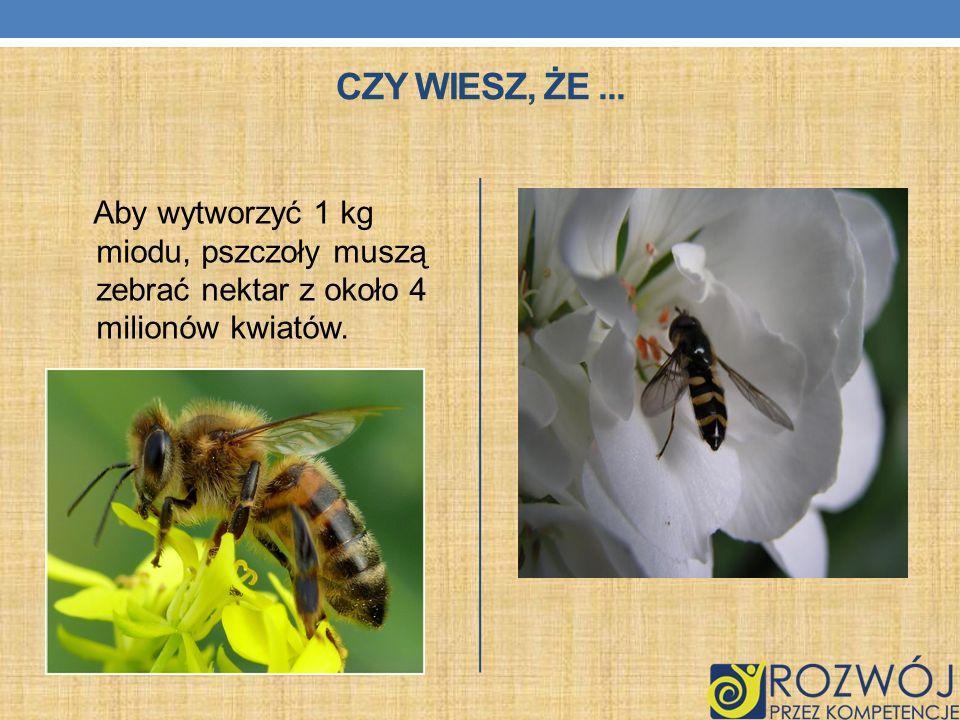 Czy wiesz, że ...Aby wytworzyć 1 kg miodu, pszczoły muszą zebrać nektar z około 4 milionów kwiatów.