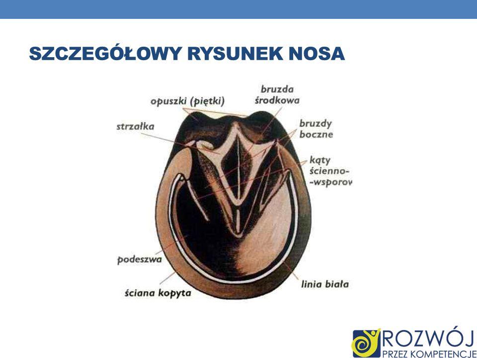 Szczegółowy rysunek nosa