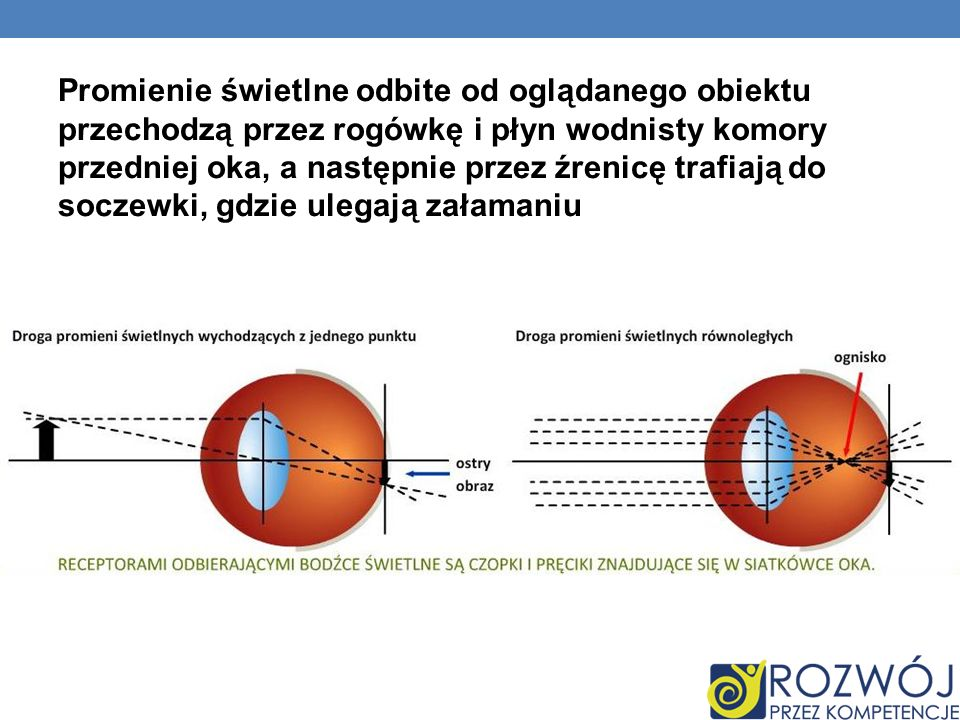 Promienie świetlne odbite od oglądanego obiektu przechodzą przez rogówkę i płyn wodnisty komory przedniej oka, a następnie przez źrenicę trafiają do soczewki, gdzie ulegają załamaniu