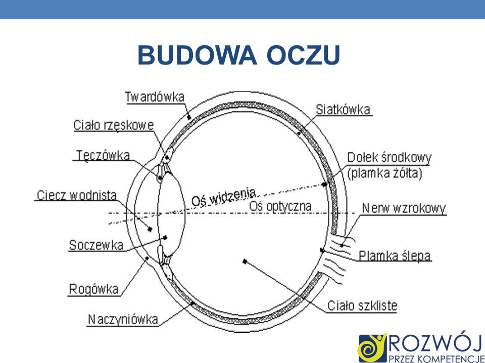 BUDOWA OCZU