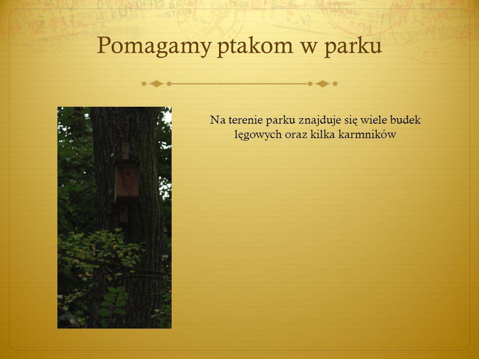 Pomagamy ptakom w parku