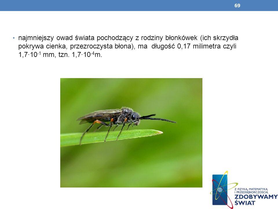 najmniejszy owad świata pochodzący z rodziny błonkówek (ich skrzydła pokrywa cienka, przezroczysta błona), ma długość 0,17 milimetra czyli 1,7∙10-1 mm, tzn.