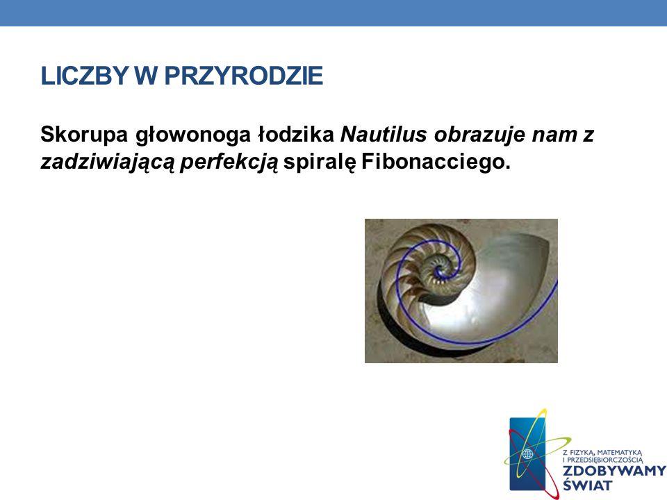 Liczby w przyrodzie Skorupa głowonoga łodzika Nautilus obrazuje nam z zadziwiającą perfekcją spiralę Fibonacciego.