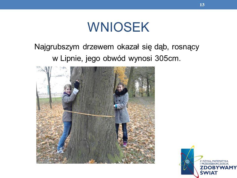 WNIOSEK Najgrubszym drzewem okazał się dąb, rosnący w Lipnie, jego obwód wynosi 305cm.