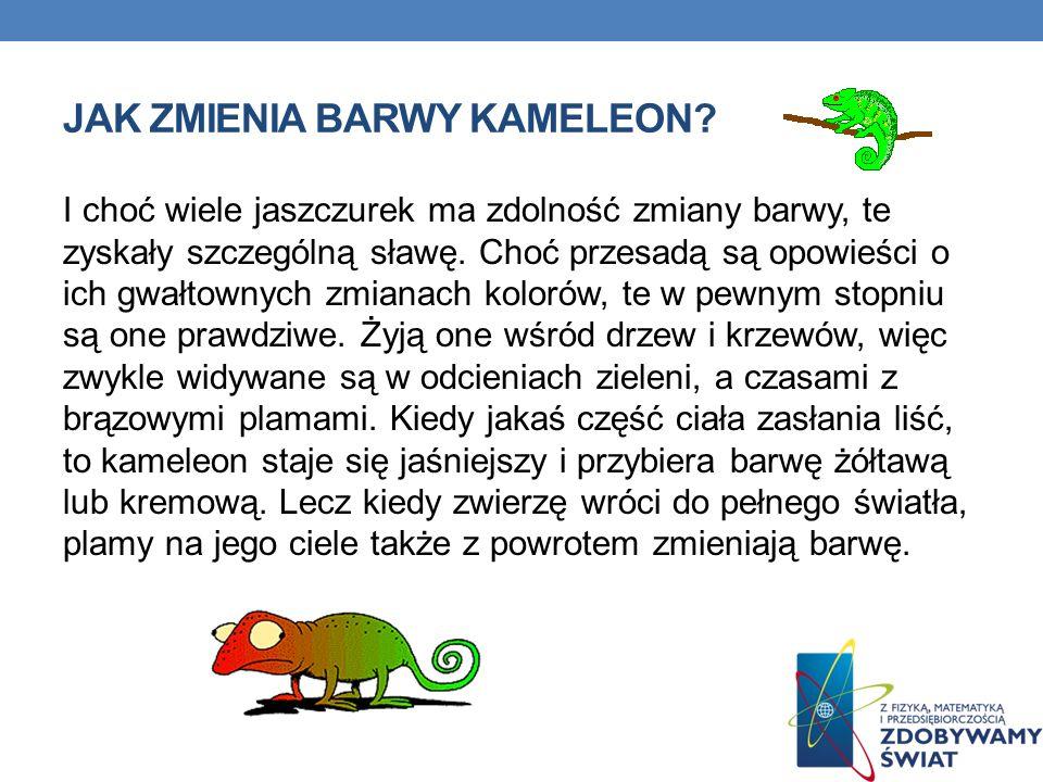 Jak zmienia barwy kameleon