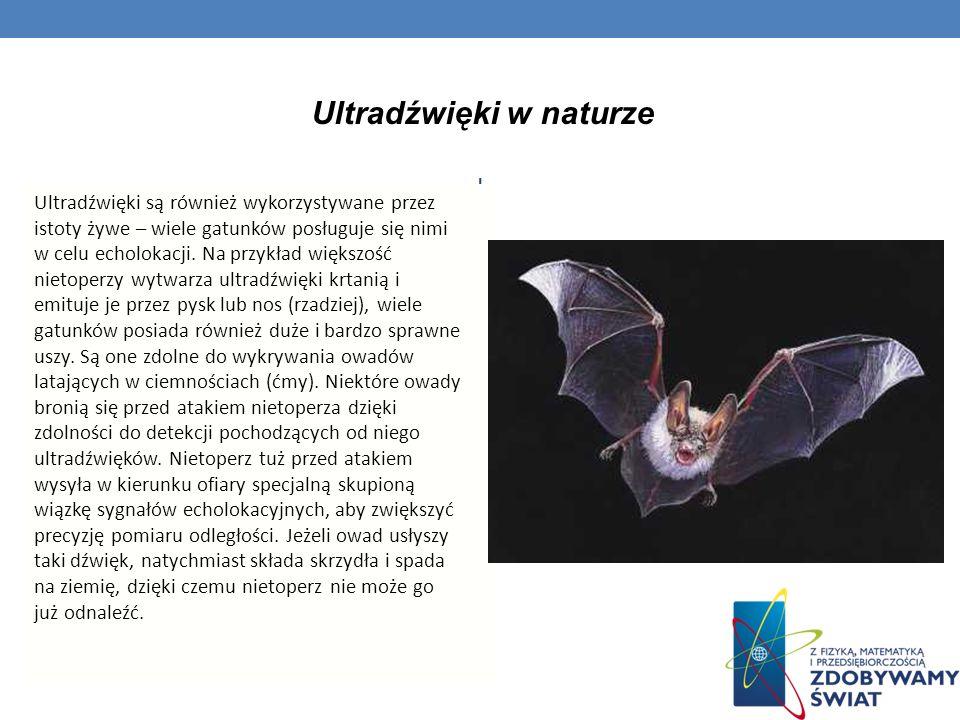 Ultradźwięki w naturze