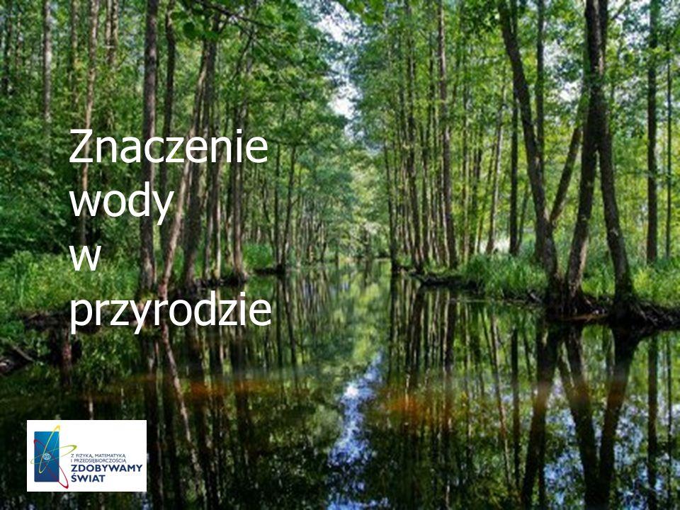 Znaczenie wody w przyrodzie