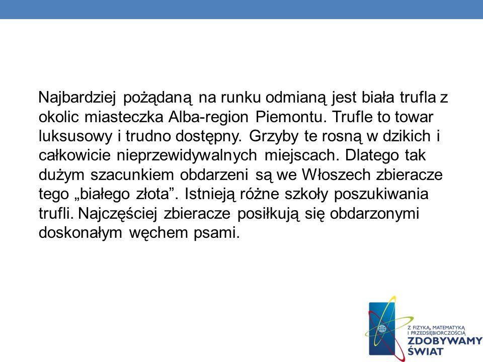 Najbardziej pożądaną na runku odmianą jest biała trufla z okolic miasteczka Alba-region Piemontu.