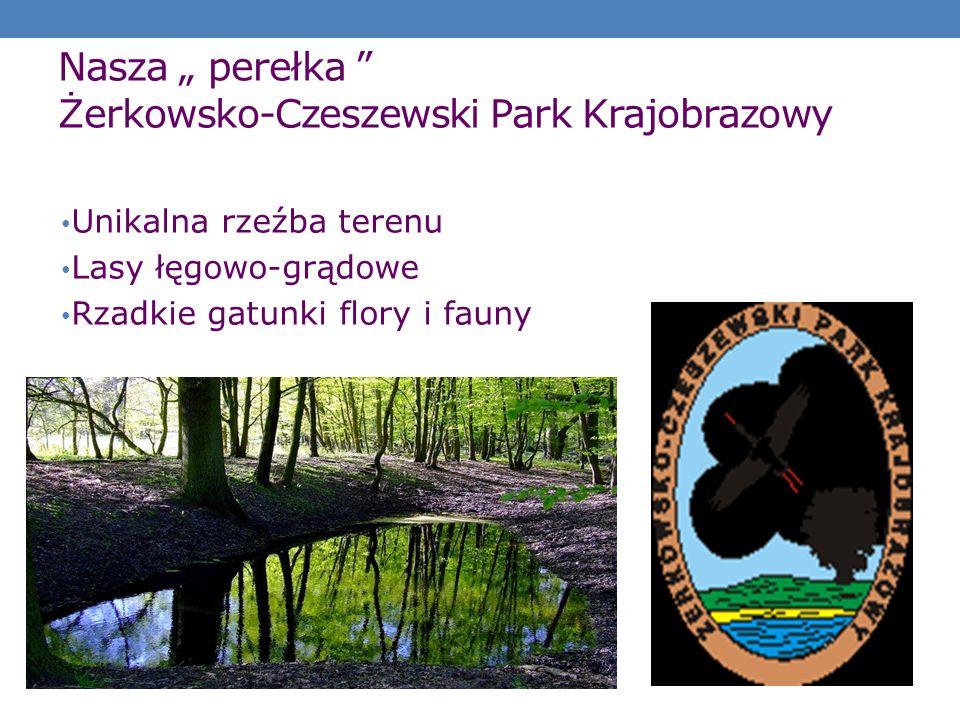 """Nasza """" perełka Żerkowsko-Czeszewski Park Krajobrazowy"""