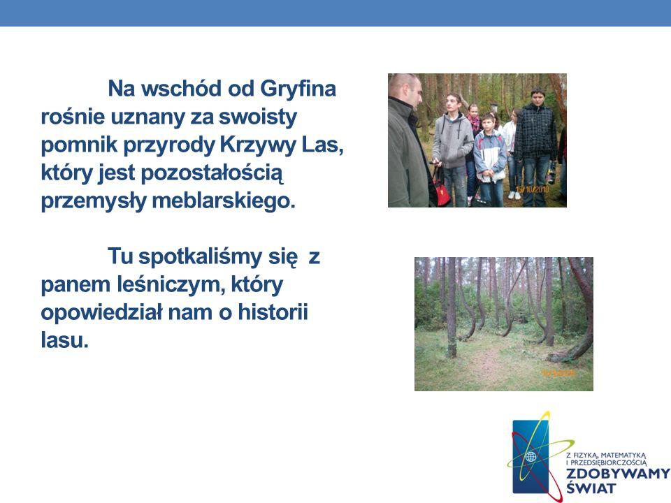 Na wschód od Gryfina rośnie uznany za swoisty pomnik przyrody Krzywy Las, który jest pozostałością przemysły meblarskiego.