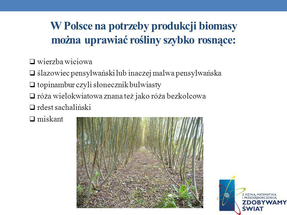 W Polsce na potrzeby produkcji biomasy można uprawiać rośliny szybko rosnące: