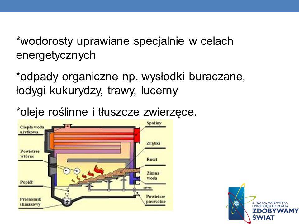 wodorosty uprawiane specjalnie w celach energetycznych
