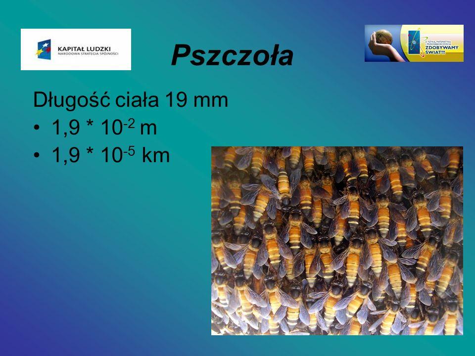 Pszczoła Długość ciała 19 mm 1,9 * 10-2 m 1,9 * 10-5 km