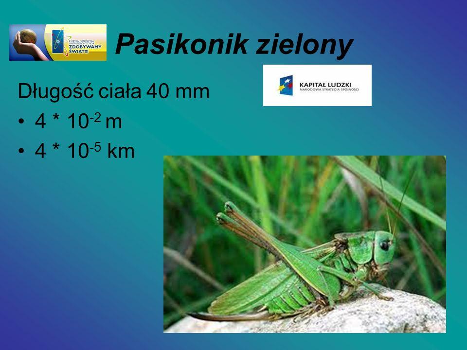 Pasikonik zielony Długość ciała 40 mm 4 * 10-2 m 4 * 10-5 km