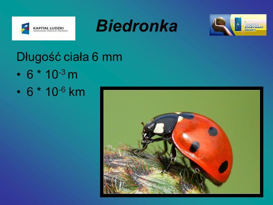 Biedronka Długość ciała 6 mm 6 * 10-3 m 6 * 10-6 km