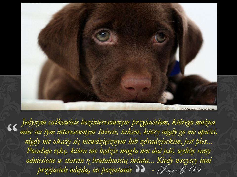Jedynym całkowicie bezinteresownym przyjacielem, którego można mieć na tym interesownym świecie, takim, który nigdy go nie opuści, nigdy nie okaże się niewdzięcznym lub zdradzieckim, jest pies...