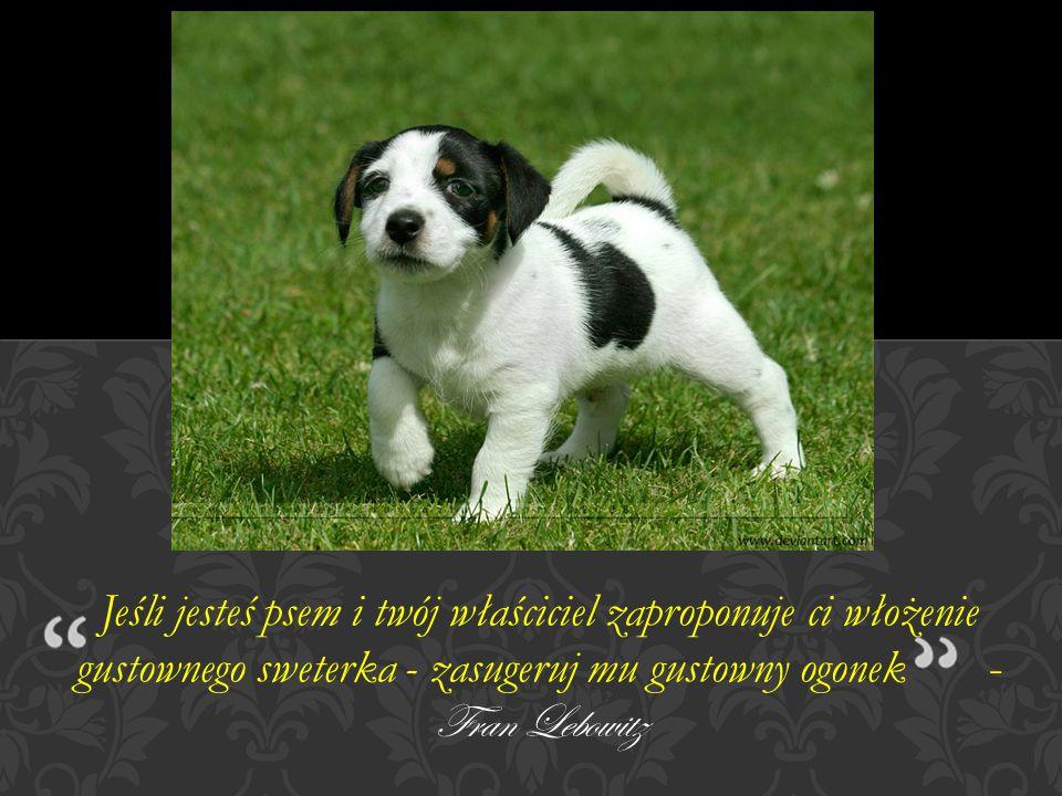Jeśli jesteś psem i twój właściciel zaproponuje ci włożenie gustownego sweterka - zasugeruj mu gustowny ogonek - Fran Lebowitz