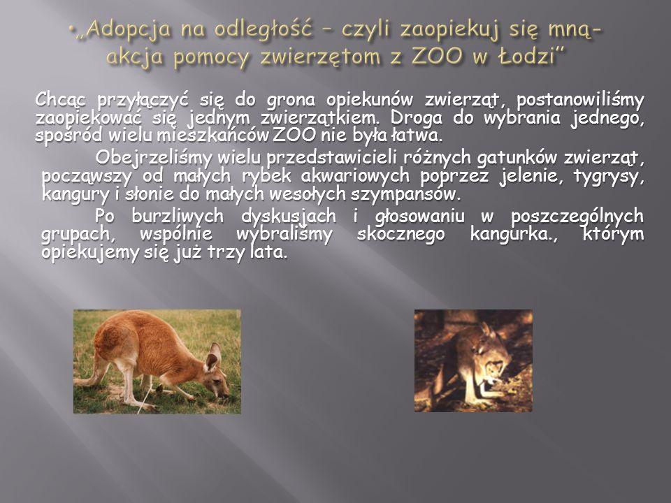 """""""Adopcja na odległość – czyli zaopiekuj się mną- akcja pomocy zwierzętom z ZOO w Łodzi"""