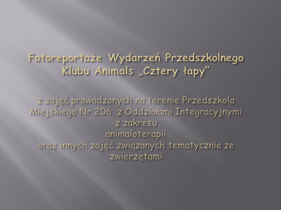 """Fotoreportaże Wydarzeń Przedszkolnego Klubu Animals """"Cztery łapy z zajęć prowadzonych na terenie Przedszkola Miejskiego Nr 206 z Oddziałami Integracyjnymi z zakresu animaloterapii oraz innych zajęć związanych tematycznie ze zwierzętami"""