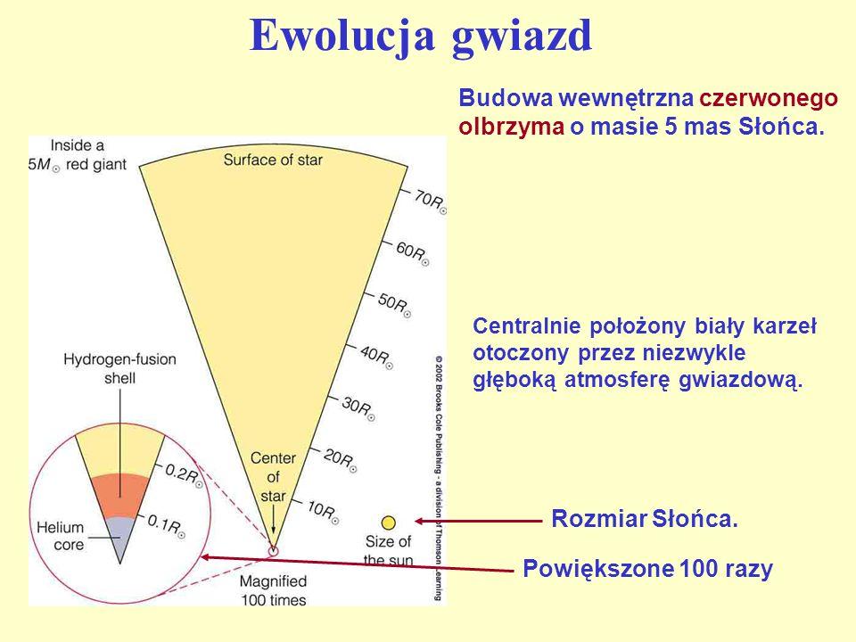 Ewolucja gwiazd Budowa wewnętrzna czerwonego olbrzyma o masie 5 mas Słońca.