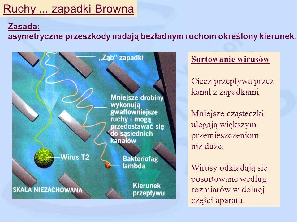 Ruchy ... zapadki Browna Sortowanie wirusów