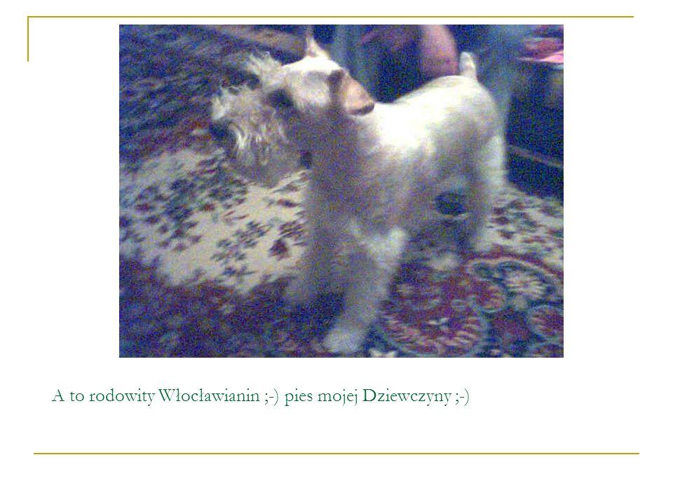 A to rodowity Włocławianin ;-) pies mojej Dziewczyny ;-)