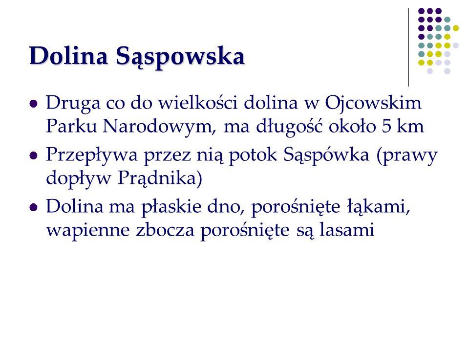 Dolina Sąspowska Druga co do wielkości dolina w Ojcowskim Parku Narodowym, ma długość około 5 km.